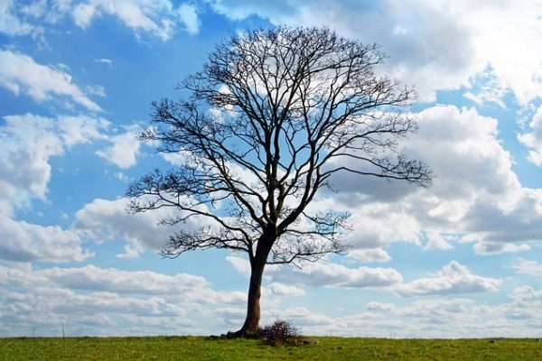 """Contrary to Popular Thinking, Going Paperless Does Not """"Save"""" Trees"""